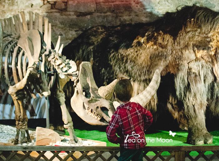 museo mamut barcelona