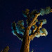 Joshua Tree light painted by Emmanuel Pampuri