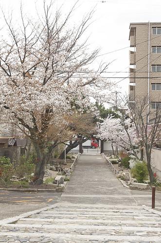 【写真】2014 桜 : 知恩寺/2020-11-13/IMGP5718