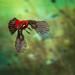 Red Harriet Jet...!!! by Alfredo11