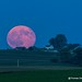 The Blue Moon Rising over Eastern Iowa 7-31-15 by Thomas DeHoff