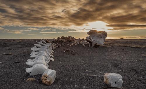 easticeland iceland whalebones beach blackbeach sunset