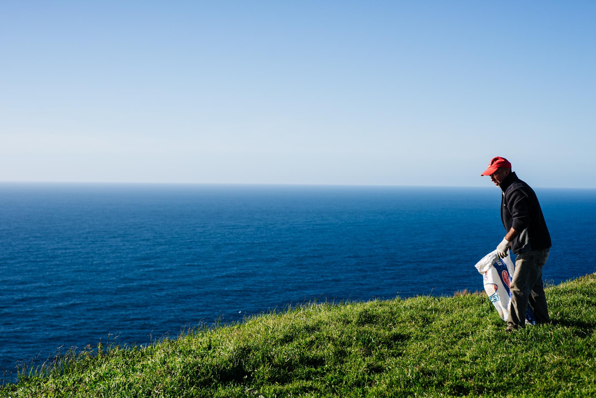 Tereprendező az Azori-szgeteken. Fotó: Dobó Diána