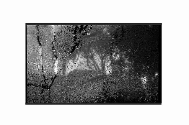 SoCal Rainy Day Landscape