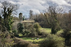 On a family walk around the beautiful Castletown House estate we came across this scene of pastoral beauty, looking across the river to the ruins of St. Wolstan's Abbey. #joehoughton #d810 #castletownhouse #castletownhousecelbridge #beautifulireland #houg