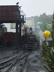Rain, steam and tulips.