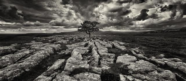 Lone Tree at Winskills