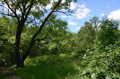 A Bronx Nature Walk - Van Cortlandt Park