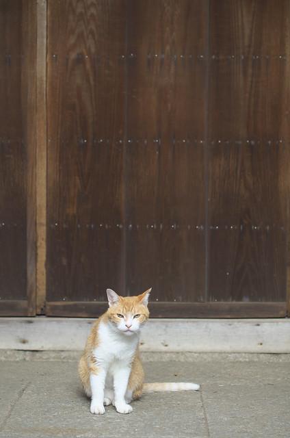 東京路地裏散歩 2013年8月3日 谷中のネコ