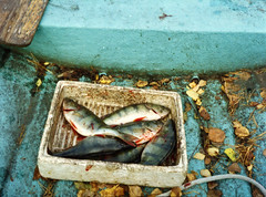 Experiment: Fish in a box