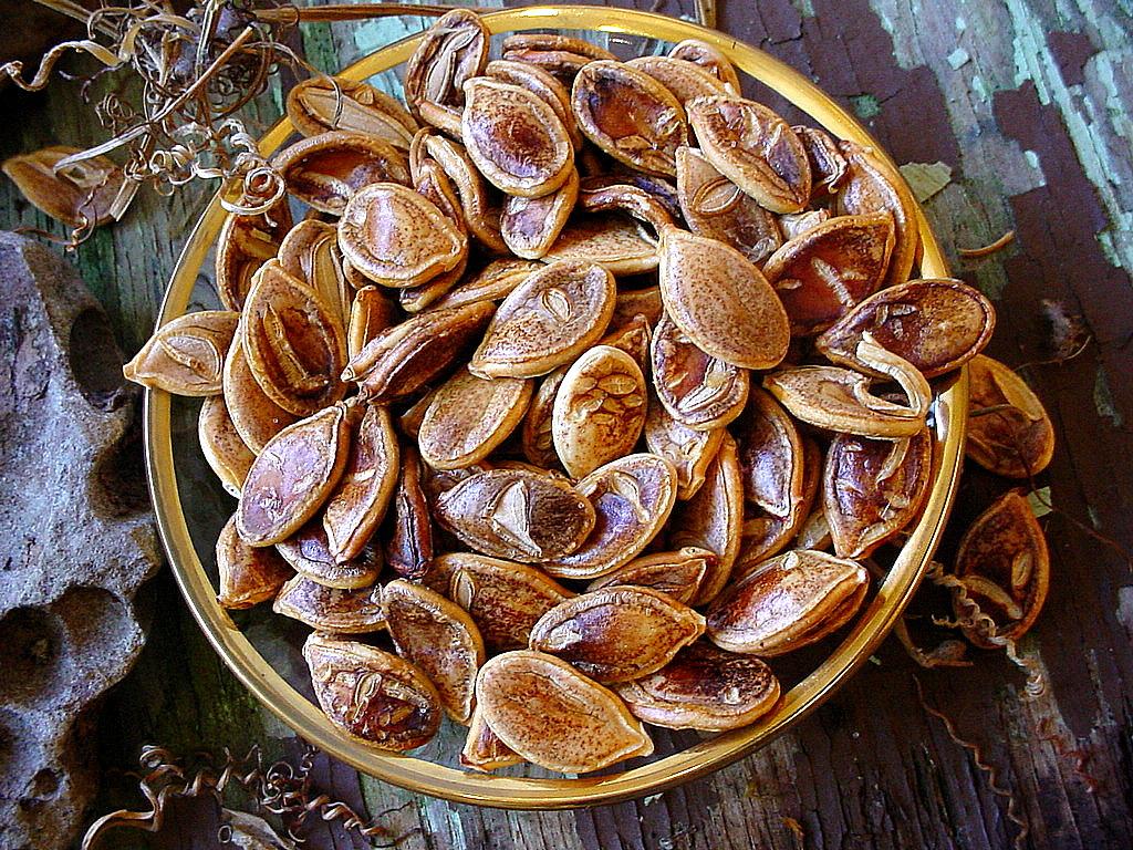 Roasted Kabocha Squash Seeds