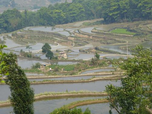 Yunnan13-Yuanyang 20 (6)