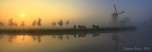 netherlands windmill misty cow fantastic mood krimpenerwaard haastrecht