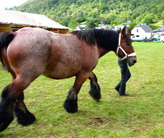 animal, mane, mare, stallion, halter, bridle, pack animal, horse, horse grooming, mustang horse, meadow, pasture,