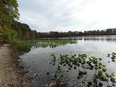 East Meadow Pond (40)