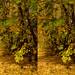 20131109_103826-foliage-3D