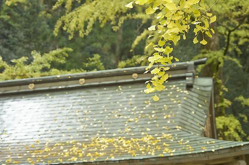 【写真】2013 紅葉 : 岩戸落葉神社(2)/2020-07-30/IMGP3161