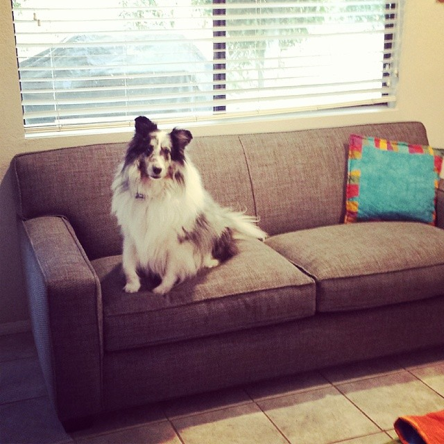 Stirling breaks in the new couch
