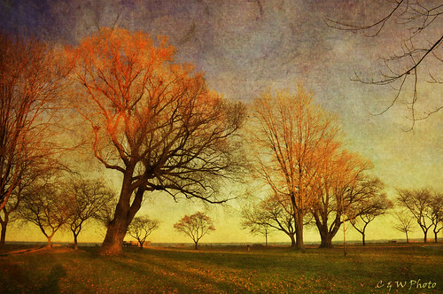autumn trees sunset fall texture colors nikon solitude treebranch latefall metropark landscrape memoriesbook