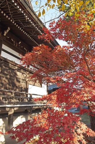 【写真】2013 紅葉 : 妙顕寺/2020-11-01/IMGP4144