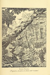"""British Library digitised image from page 189 of """"Illustrations prepared for White's Ancient History of the Maori"""""""