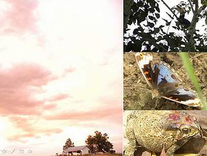 左:從小屋環繞360。視野非常遼闊。右上:早晨時看見當地的大嘴鳥,通常有黃嘴跟白嘴二種。右中:這種蝶的色澤很華麗,尚未查出名稱。右下這蟾蜍當時正被眼鏡蛇咬在口中,蛇雖被我們嚇走,但它看來已經奄奄一息。