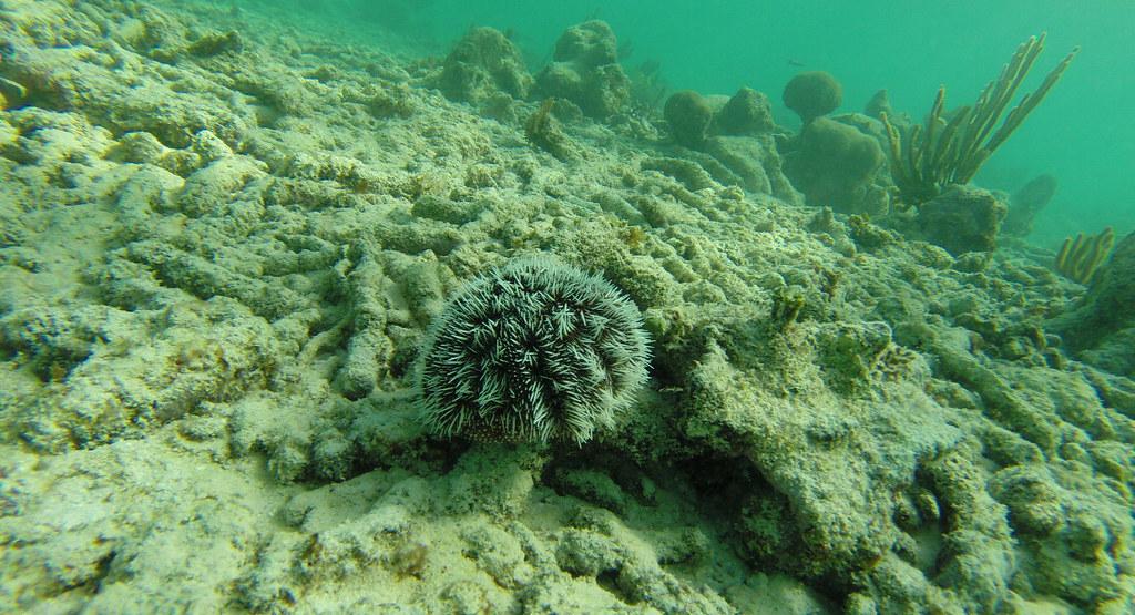 Yucatan trip photos from snorkling 11975647025_567325641d_b