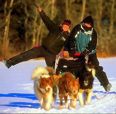 Dog sledding fun at Wintergreen Dogsled Lodge