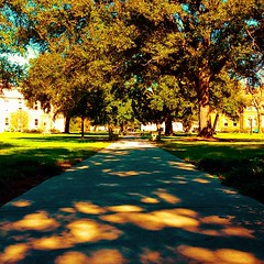 another beautiful day on the Academic Quad! #onlyattulane #onlyinneworleans #tulane #nola