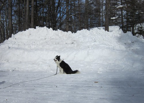 除雪した雪の山 2014年2月18日09:53 by Poran111