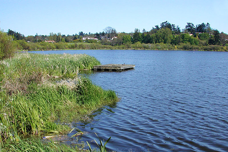 Swan Lake / Christmas Hill Nature Sanctuary, Saanich, Victoria, Vancouver Island, British Columbia, Canada