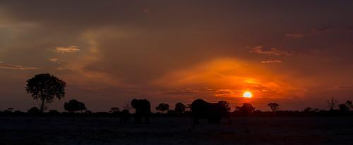 africa sunset nature animals tiere sonnenuntergang sundown wildlife ngc natur safari npc zimbabwe afrika elefant mammals allrightsreserved africanelephant herbivore simbabwe bigfive hwange loxodontaafricana säugetier elephantidae 2013 pflanzenfresser thomasretterath copyrightthomasretterath littlemakololo