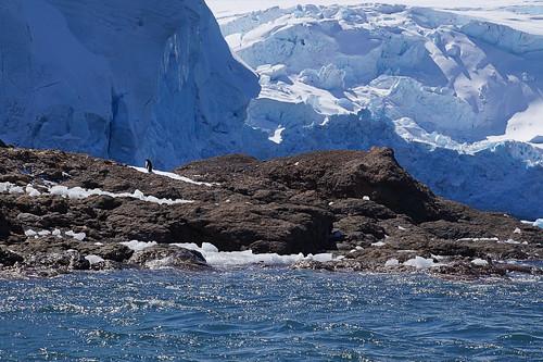 133 King George Island - Zodiaccruise
