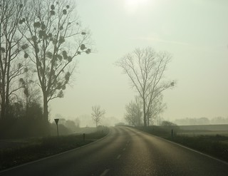drive in the morning mist