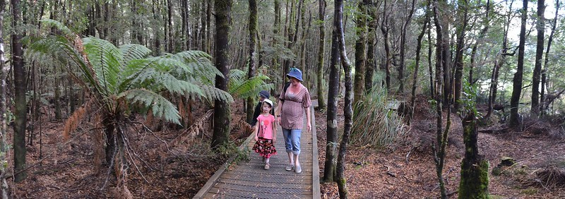 Huon Pine Walk - Tarkine Wilderness - Corinna - Tasmania