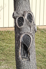 Screaming tree