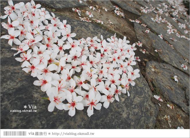 【桐花2014】南投油桐花景點~牛耳石雕藝術渡假村賞桐趣31