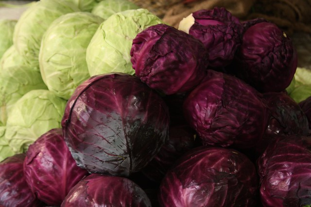 cabbage measuring color intensity