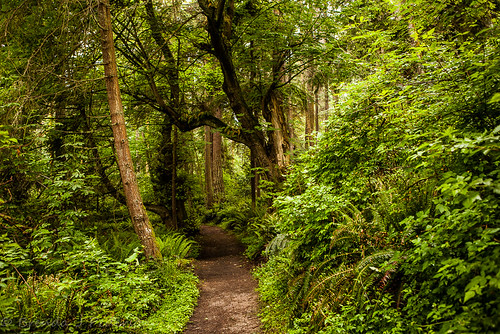 tree green forest washington woods quiet path may peaceful trail whidbeyisland wa curve 2014 culinaryfool 2470mm28 southwhidbeyislandstatepark brendajpederson