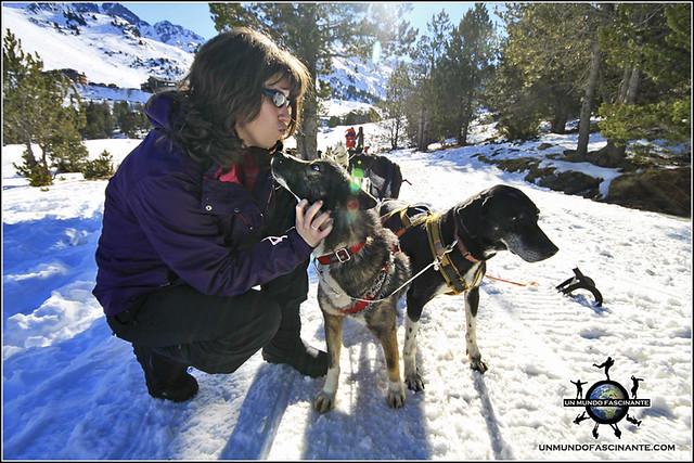 Andorra, Grandvalira. Mushing - Trineo de Perros. Cachorro mismoso.