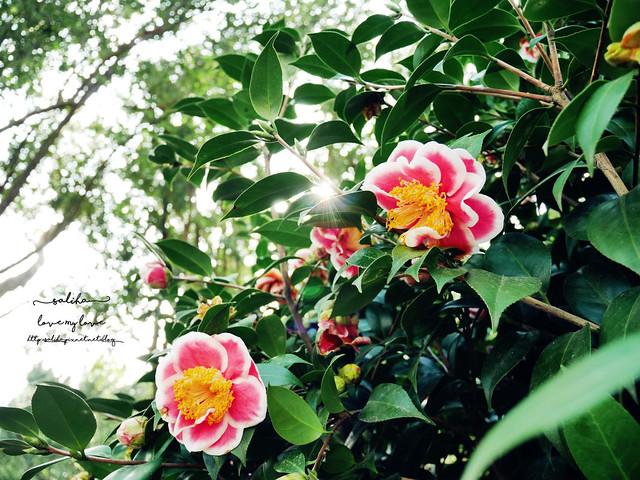陽明山一日遊免門票景點花卉試驗中心 (12)
