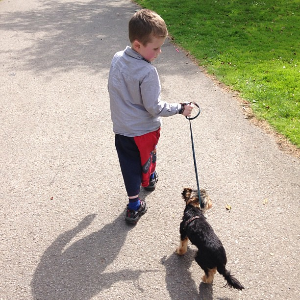 Max actually WALKING THE DOG!!! This is *huge*!! #autism