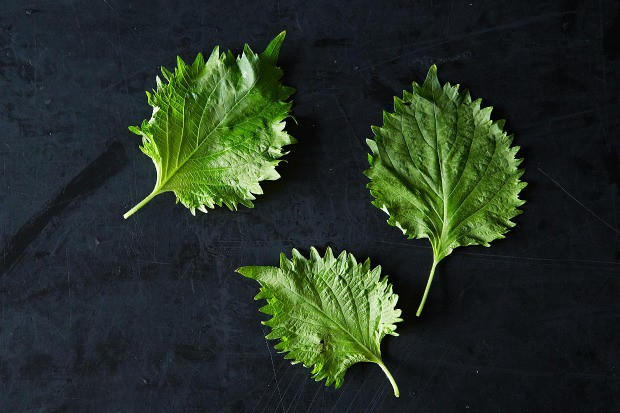 A Week's Worth of Ideas for Using Shiso, from Food52