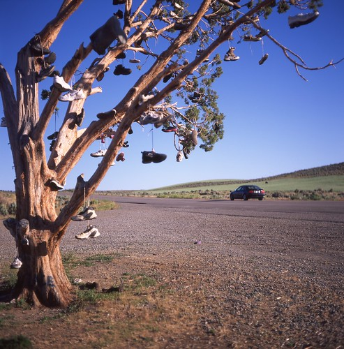 travel tree mamiya tlr tourism mediumformat square shoe shoes slide roadtrip tourist slidefilm hwy 120film velvia squareformat americana fujifilm openroad roadside slides hwy395 fujichrome e6 mamiyac3 shoetree twinlensreflex rvp us395 highway395 80mm velvia50 offtheinterstate ushighway395 mamiyaflex sekonic roadgeek rvp50 mamiyasekor colorreversal openroads l358 ontheopenroad fujichromevelviarvp50 ravendaleca mamiyac3professional disneychrome ravendalecalifornia 6×6tlr