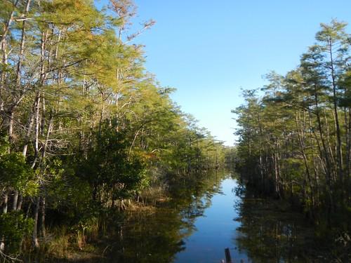 water sunrise florida swamp watershed everglades nationalparks swampbuggy acquifer