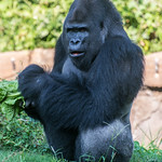 2013-08-31_Dallas-Zoo-2903