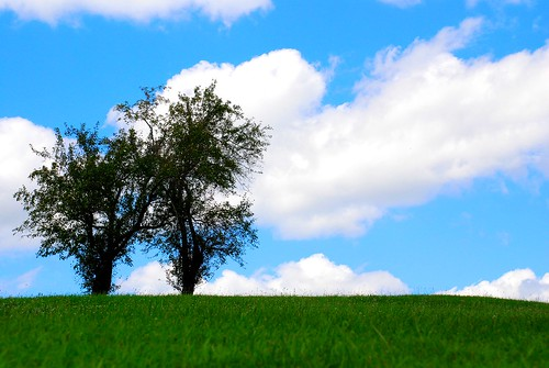 park trees tree aj grove kentucky hill jolly aspen gumm gumm238