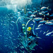MDSU 2 Key West dives September – October 2013 [Image 6 of 16] by DVIDSHUB