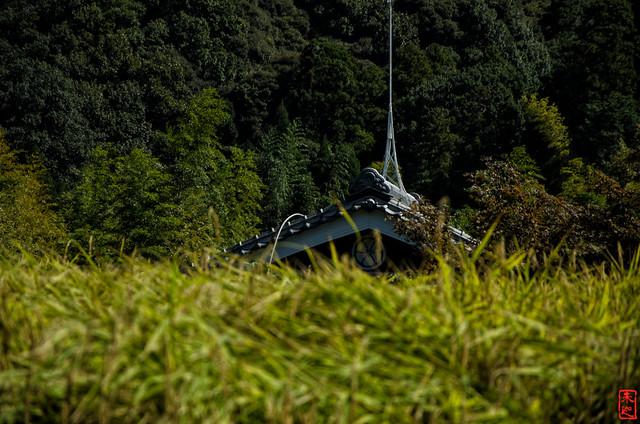「丸に剣片喰」 神戸市北区 - 兵庫