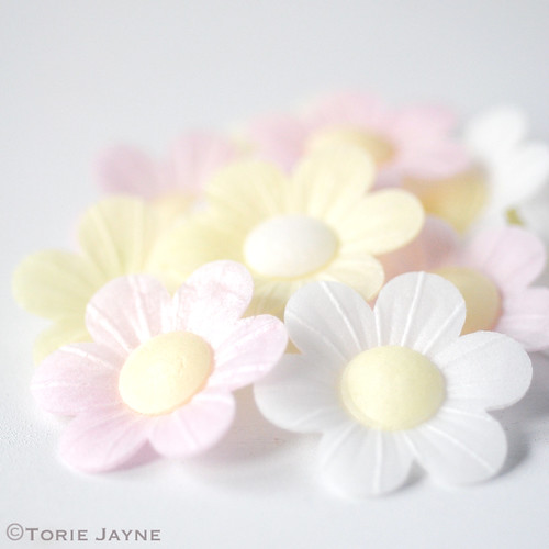 Wafer daisies